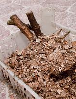 Георгин, корнеклубни, подготовленные к зимнему хра