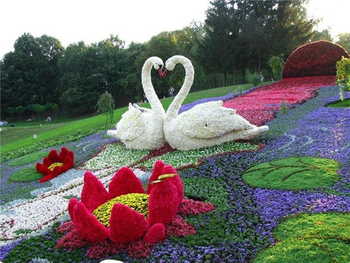 Красивая клумба с лебедями