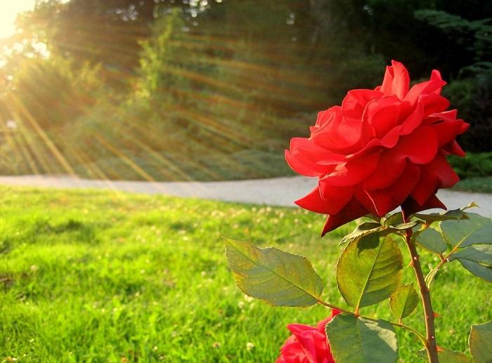 Без хорошего освещения невозможен нормальный фотосинтез, поэтому листья начинают отмирать