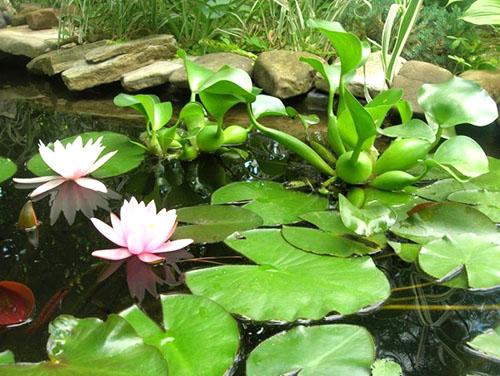 Красивый домашний пруд
