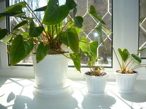 Молодые растения нуждаются в кропотливом уходе