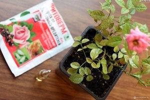 Действие Актары на растения