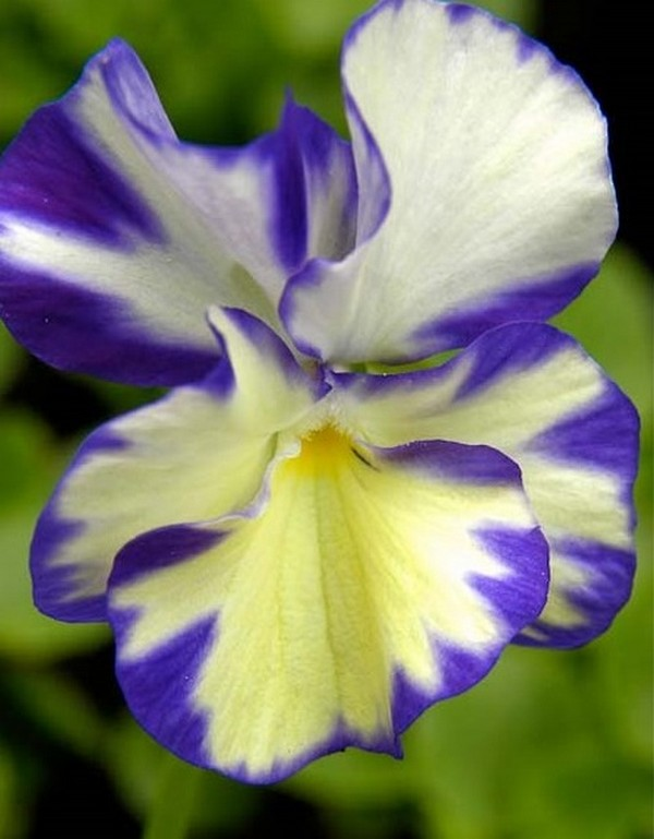 Пестрый цветок