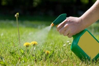 Избавляемся от травы в огороде раз и навсегда! Только народные средства
