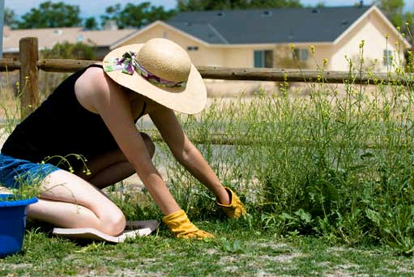Прополка хоть и древний метод борьбы с сорняками, но все еще не менее эффективный, чем современные средства.