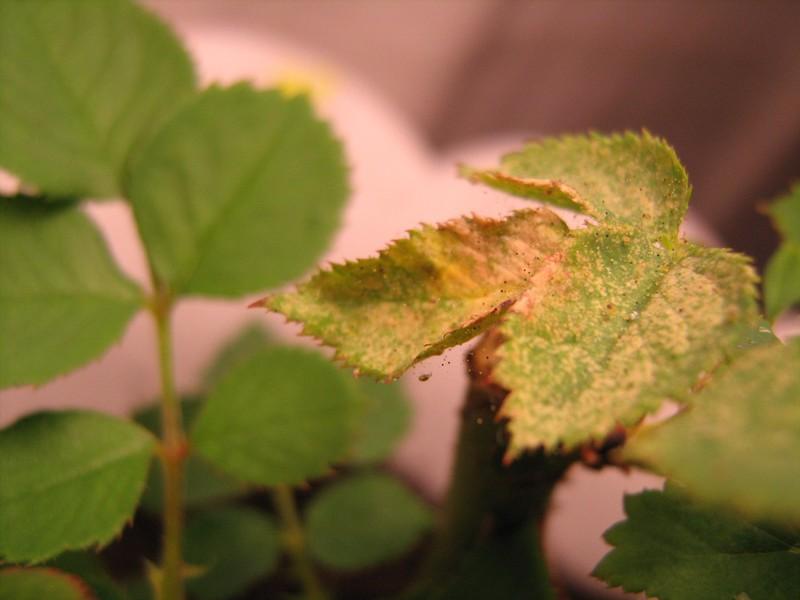 Вредители растений