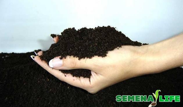 Почва для гиацинта