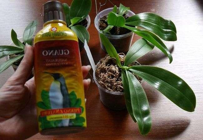 Укоренитель для орхидеи