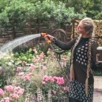 Уход за розами летом: как ухаживать за цветами в отрытом грунте.