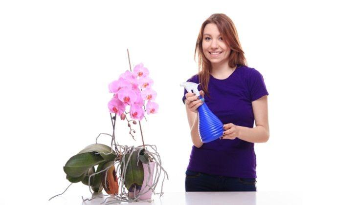 Дополнительно можете опрыскивать орхидею пульверизатором
