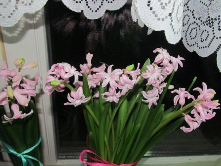 гиацинты к 8 марта