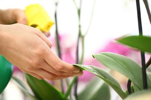Активный карантин орхидеи