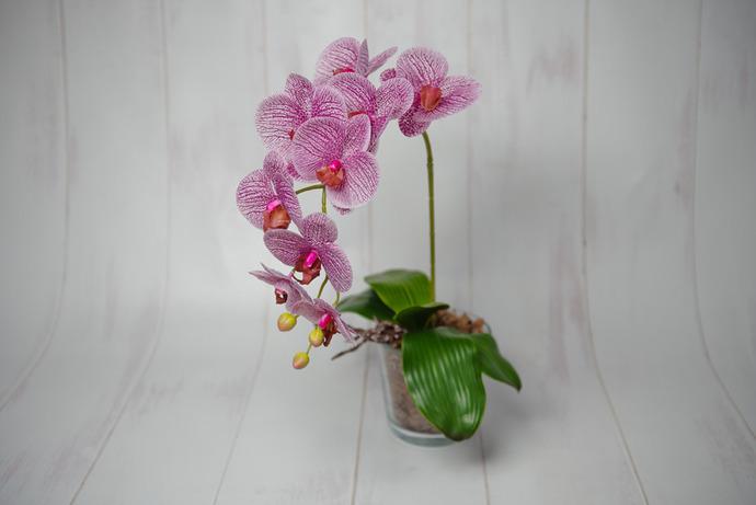 Ограждение орхидеи от прямых солнечных лучей