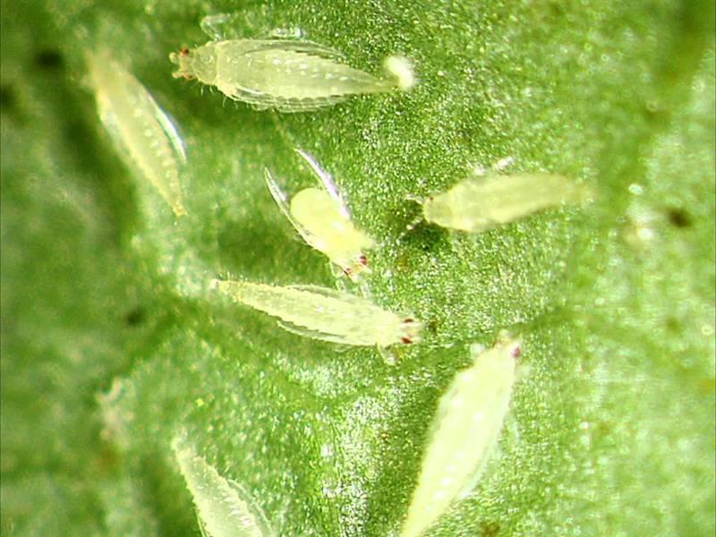 Какие есть вредители растений