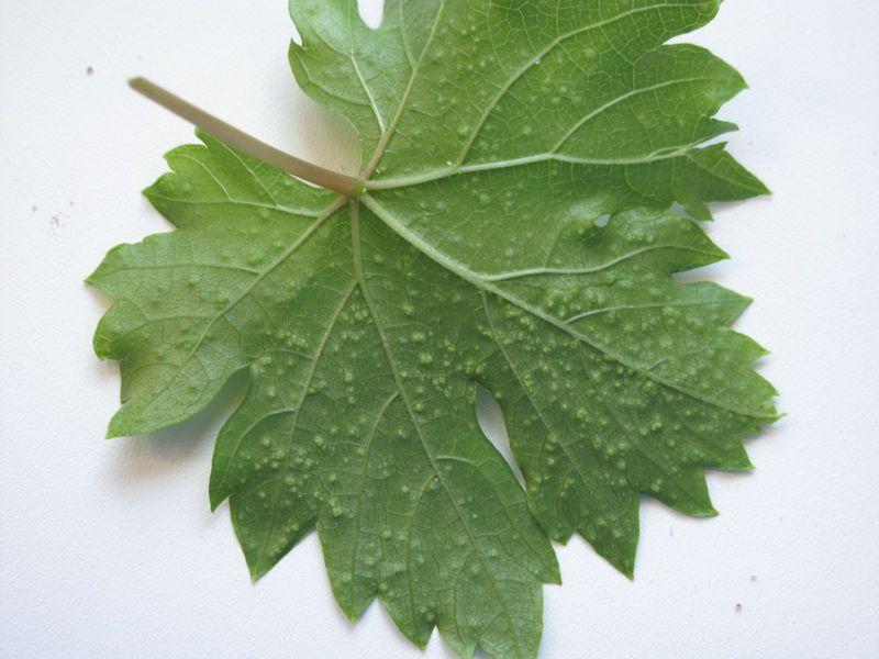 Паразиты растений