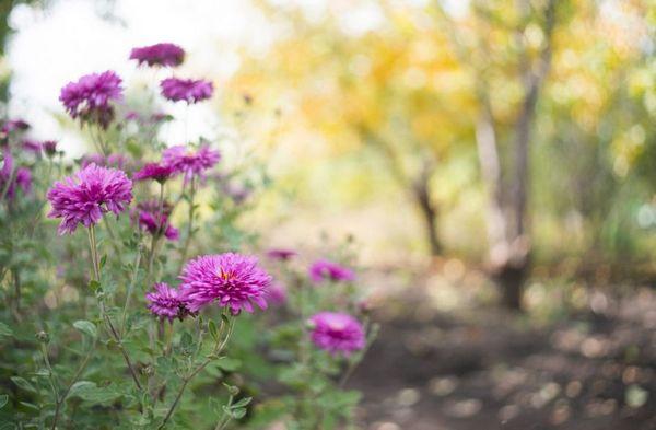 Уход за цветком должен быть соответствующим