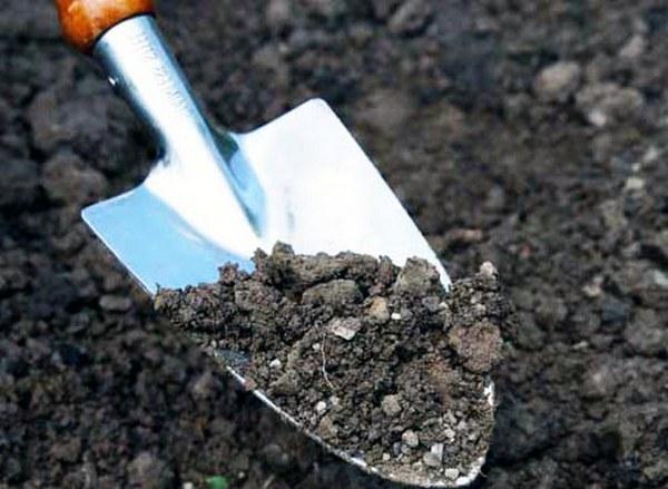 Нужно давать подсыхать почве, но не слишком долго