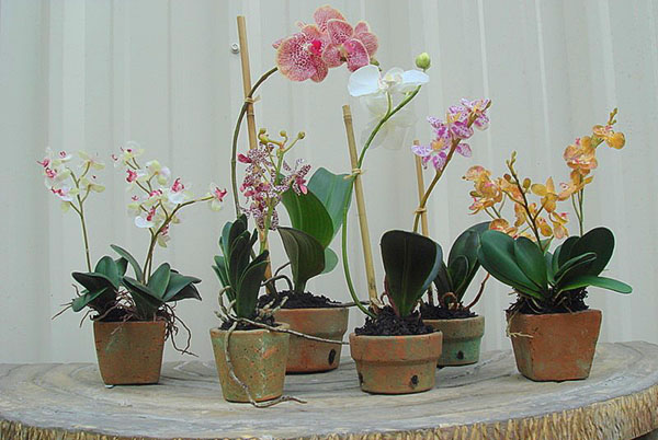 Специальные керамические горшки для орхидей