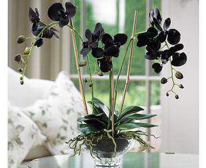 Какие условия любит черная орхидея