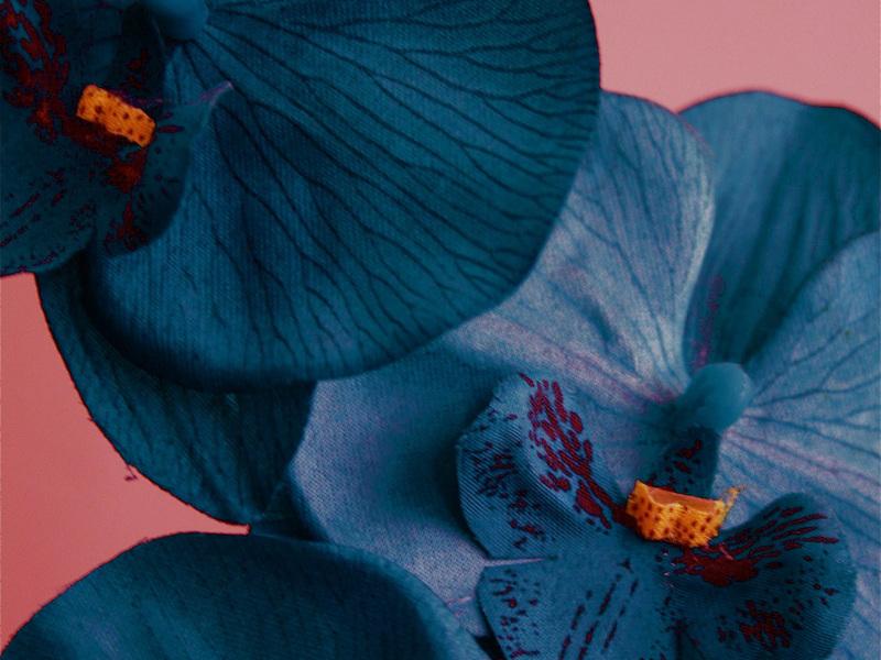 Красивый цветок орхидея